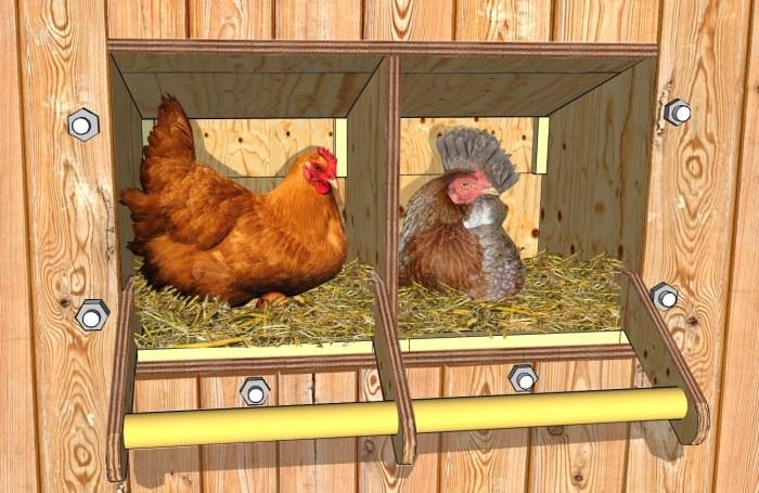 Construire des pondoirs nichoirs pour poules plans for Construire vos propres plans