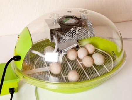 couveuse artificielle d'oeufs - incubateur