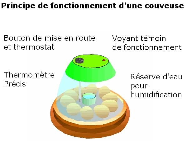 principe de fonctionnement d'une couveuse pour oeufs
