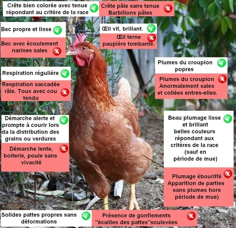 reconnaitre une poule malade