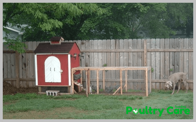 Backyard-Chicken-Coop-by-Robb