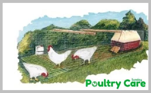 Portable-Mini-Chicken-Coop-Plan