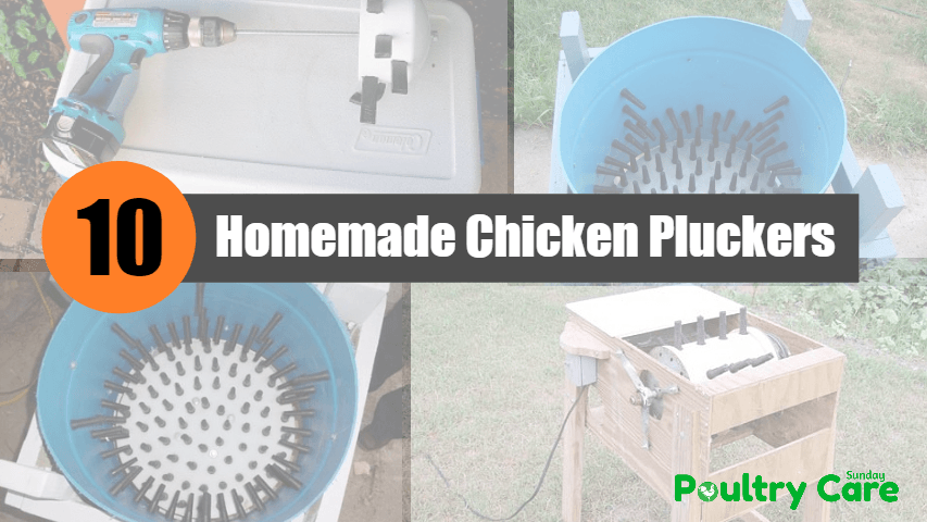 Homemade-Chicken-Pluckers