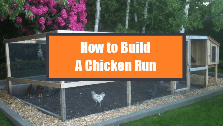 How-to-Build-a-Chicken-Run