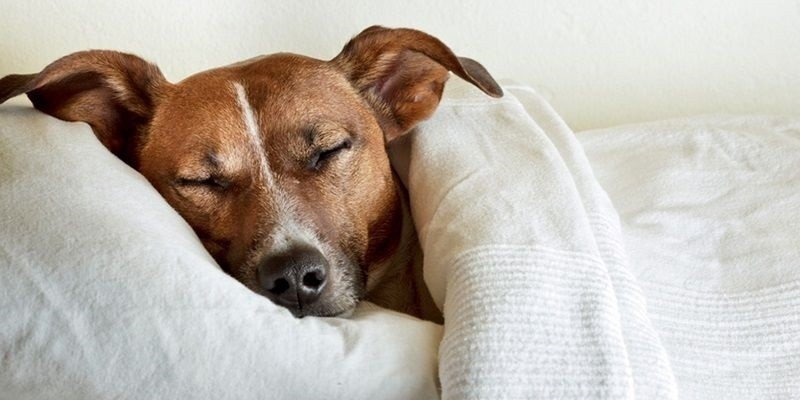 Where Should Your Dog Sleep?