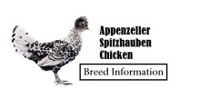 Appenzeller-Spitzhauben-Chicken Breed