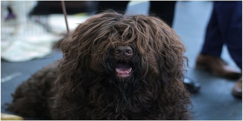What to do About Matted Dog Hair Remedy