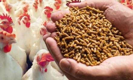 How to Boost Broiler Feed Efficiency Beyond the Nutrition