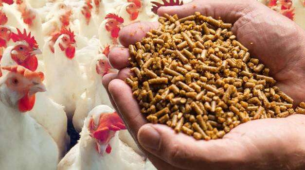 4 Important Factors to Keep in Mind When it Comes to Poultry Feed Formulation