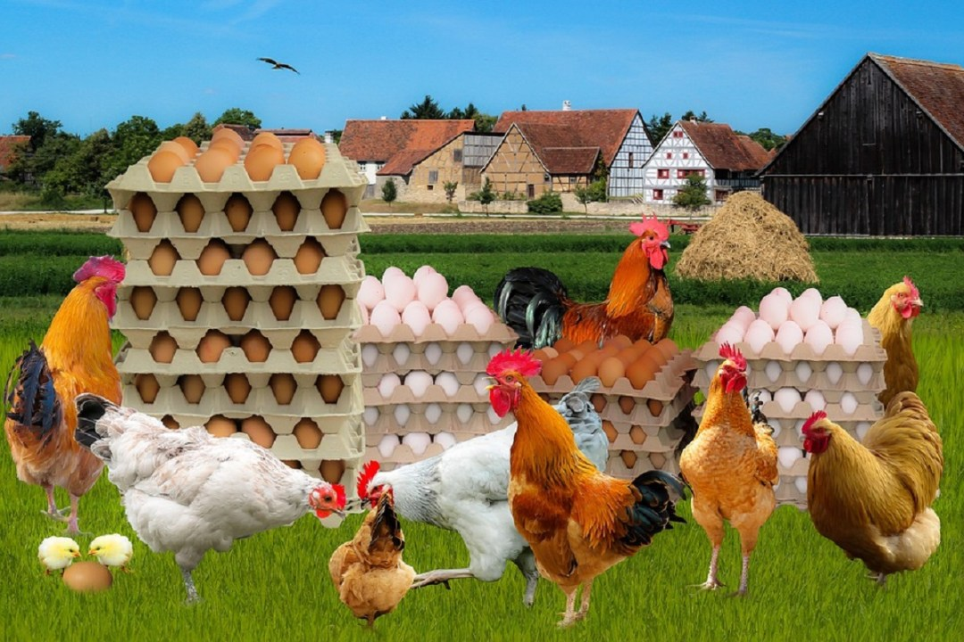 Poultry Health Management