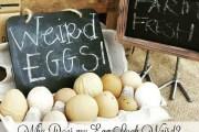 weird eggs