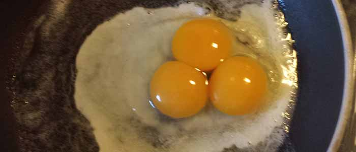 Multi Yolk Eggs