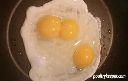 Triple Yolk Egg