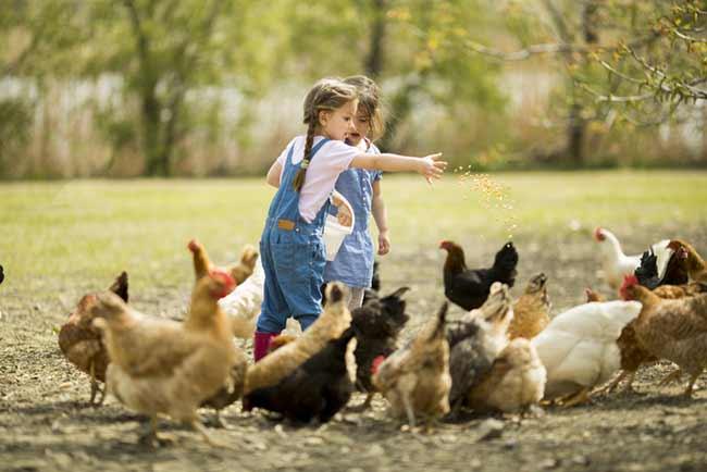 Children-Feeding-Chickens