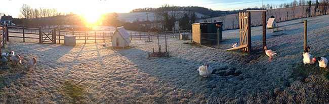 Frosty Spring Morning