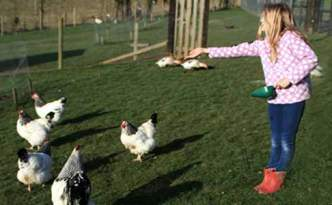 Looking After Chickens
