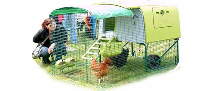 What Size Chicken House