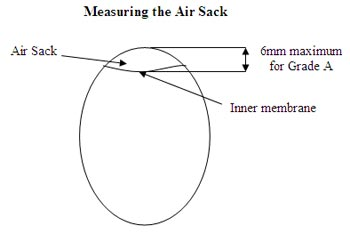 Measuring the Air Sack