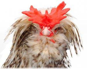 Head of Houdan Chicken