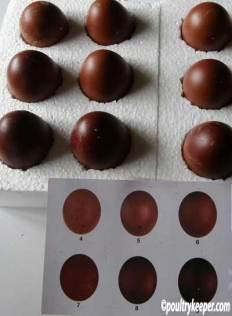 Copper Black Marans Eggs