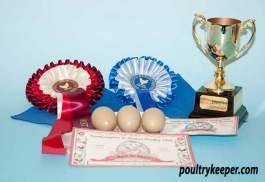 Best in Show Eggs