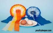 3 different bantam eggs
