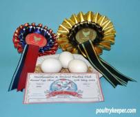 3 White Bantam Eggs