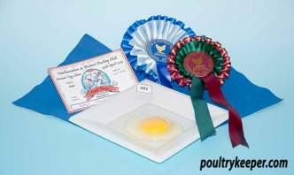 Best Egg Contents