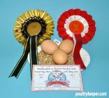 Three Tinted Hen Eggs