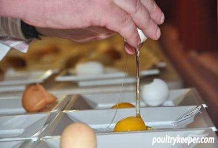 Tim McNight Cracking Eggs