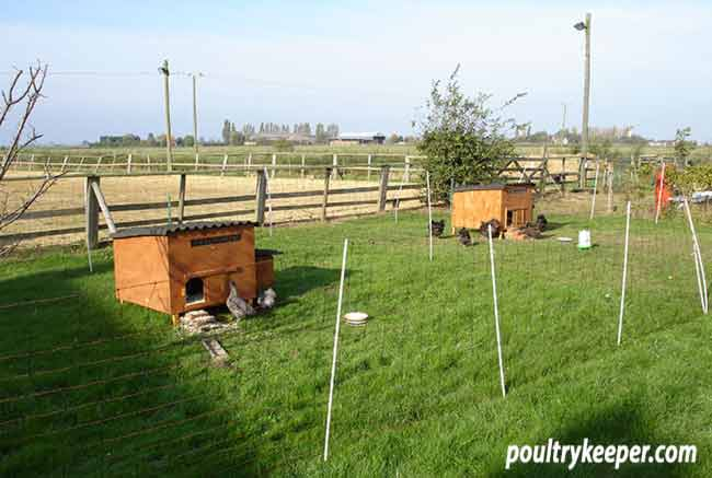 Electric Poultry Netting around Chicken Houses
