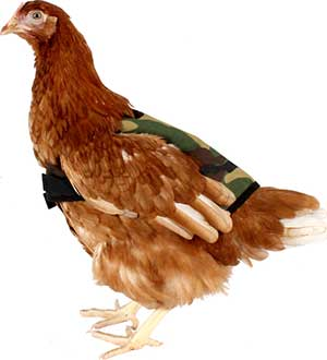 Camouflage Chicken