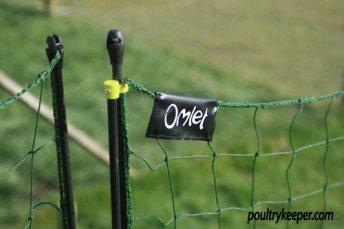 Top of Omlet Chicken Netting Kit