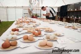 Egg Classes