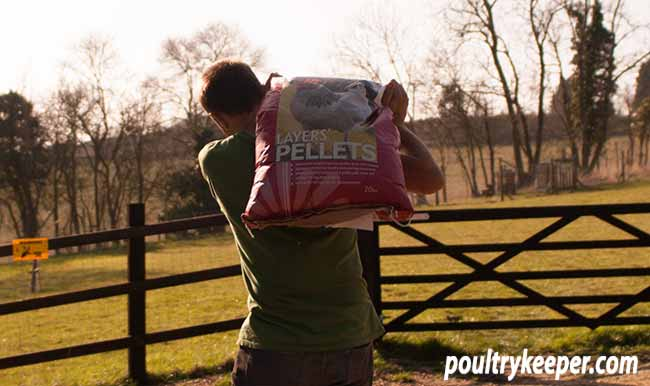 Carrying Poultry Food