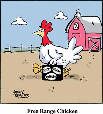Free Range Chicken Cartoon