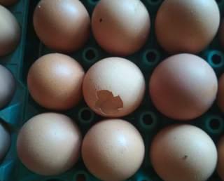 Low Pathognomonic Avian Influenza (LPAI) In Poultry, LPAI in poultry, h5n2 in poultry, bird flu