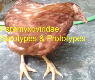 Paramyxoviridae in poultry