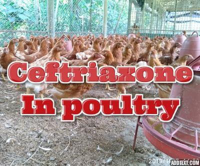 Ceftriaxone in poultry