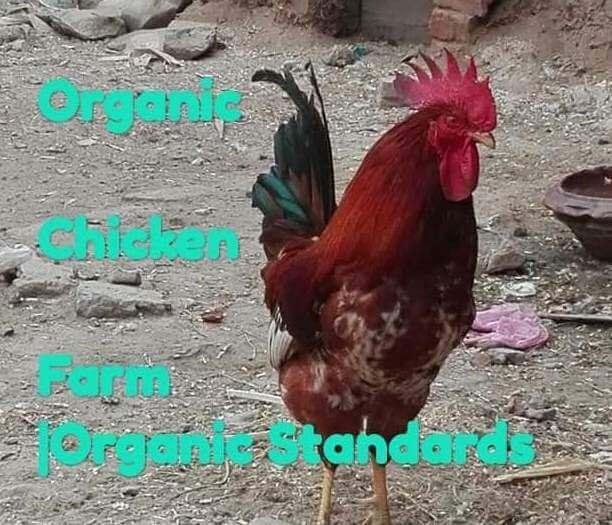 Organic chicken standards