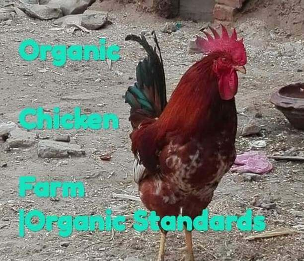 Organic chicken standards