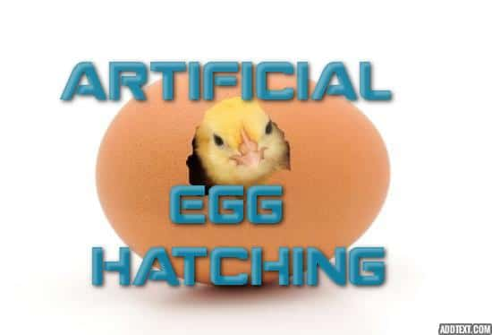 Artificial egg hatching