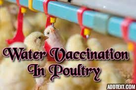 Drinking-water-vaccination-in-poultry
