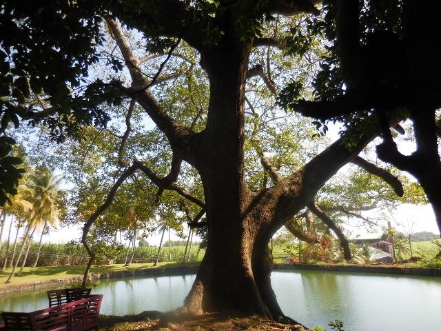 rituel-arbre-planté