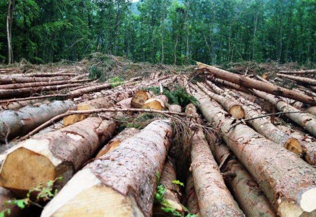 Le Brésil attire de nombreux trafiquant à cause de ses richesses naturelles, mais aussi ses lacunes en matière de protection de l'environnement. D'août 2015 à juillet 2016, 7.989 km² de forêt ont disparu en Amazonie.