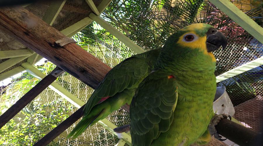 Zeca Papagaio da Pousada Sorocotuba Guaruja - Praia da Enseada