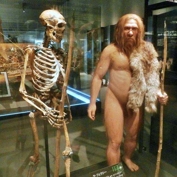 Skeleton_and_restoration_model_of_Neanderthal_La_Ferrassie_1 (1)