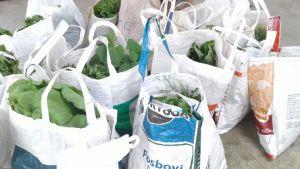 cesta-de-organicos