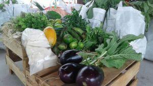 produtos-organicos
