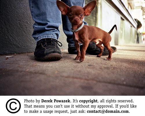 Chihuahua by Derek Powazek